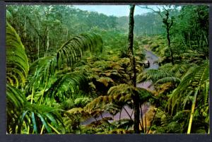 Fern Forest,Hawaiian National Forest BIN