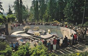 Polar Bears, Stanley Park, VANCOUVER, British Columbia, Canada, 40-60´s