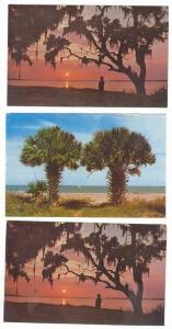 2 PC LOT: Calibogue Cay and Palm Trees,Hilton Head,SC / South Carolina 1950-60s