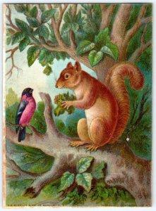 SQUIRREL & BIRD 1800's VICTORIAN ERA*E G RIDEOUT*CADWELL LITHOGRAPHIC CO NY