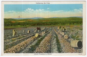 Gathering the Crop, Potato Digging in Maine