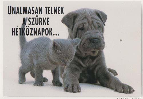 Cat With Hungary Hungarian Bulldog Dog Love Romance Photo Postcard