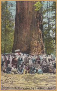 Santa Cruz, Calif., Tourist Camp, Big Tree Grove (Redwood ?) - Pacific Novelty