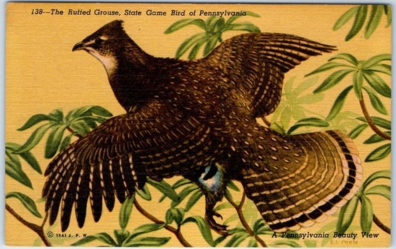 c1940s pennsylvania postcard pa state bird ruffed grouse curteich
