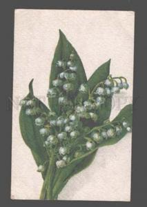 083628 LILY of the Valley by C. KLEIN Vintage Russian Color PC