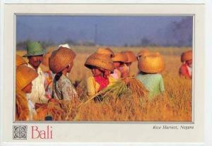 Rice Harvesters, Hand Woven Hats, Negar, Bali, Indonesia, 40-60s