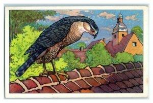 Sparrowhawk, German Birds of Prey, Echte Wagner Trade Card *VT31T