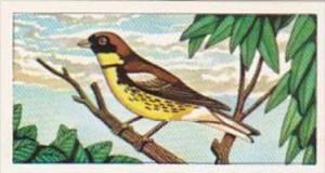 Glengettie Tea Trade Card Rare British Birds No 12 Yellow-Breasted Bunting