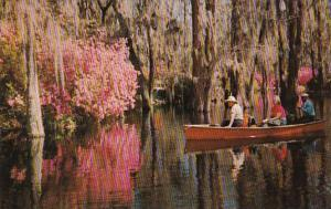 South Carolina Charleston Boating In Cypress Gardens