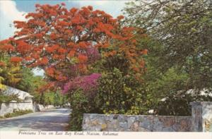 Bahamas Nassau Royal Poinciana Tree On East Bay Road