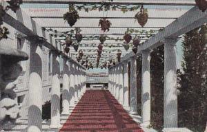 Pergola and Grapevine Atlantic City New Jersey 1910