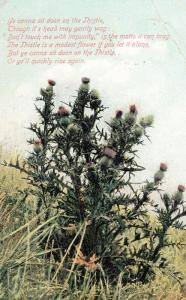 Cactus Thistle Prickly Plant Getting Stung Thorns Antique Poem Songcard Postcard