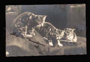 002908 Three lovely KITTIES Tabby Vintage Photo PC