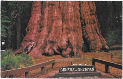 US California - Sequoia National Park, General Sherman Tree.  Unused.