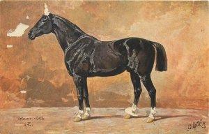 Horse early postcard serie Luxuspferde Oilette Raphael Tuck