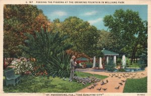 Vintage Postcard Pigeons Drinking Fountain in William Park St Petersburg Florida