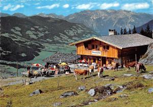 Zell am Ziller Jausenstation Rosenalm Rohrberg Terrace Cows