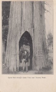 Cycle Path through Cedar Tree , TACOMA , Washington , 1901-07