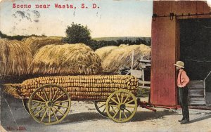 F70/ Wasta South Dakota Postcard 1911 Scene Exaggeration Corn