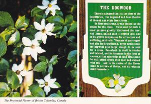 Canada Dogwood Provincial Flower Of British Columbia