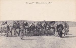 Men With Camels, Chameaux A La Ration, ALEP, Syria, Asia, 1900-1910s