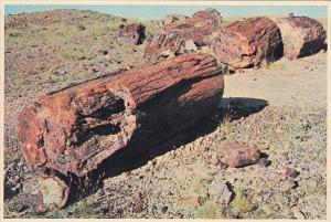 Petrified Log Sections Petrified Forest Nationa Park Arizona