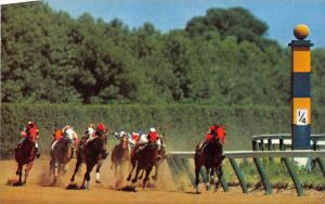 13145 DE Wilmington     Delaware Park Race Track  At the Homestretch