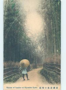 Old Postcard WALKING WITH UMBRELLA IN THICKET OF BAMBOO TREES Kyoto Japan F4965