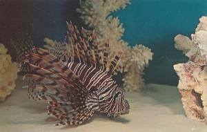 Aquarium at Niagara Falls NY, New York - Turkey or Lion Fish