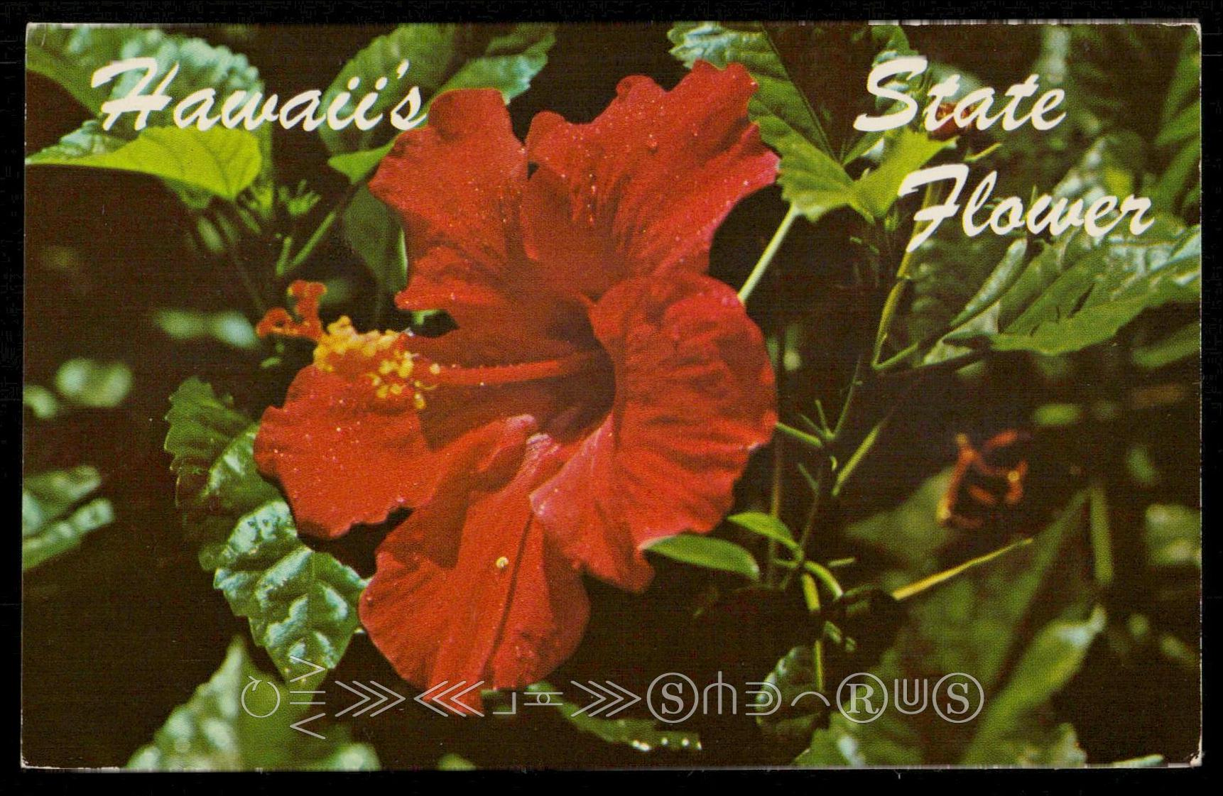 Red hibiscus hawaii state flower hippostcard listing izmirmasajfo