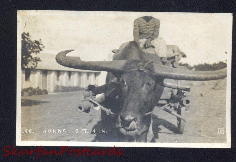 RPPC LONGHORN CATTLE COW OXEN LARGE HORNS PHILIPPINES REAL PHOTO POSTCARD