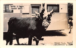 Circus Post Card Andy D Day Freak Bull Brookville, Ohio USA Unused