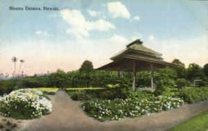 hawaii, Shasta Daisies, Flowers (1910s) Postcard