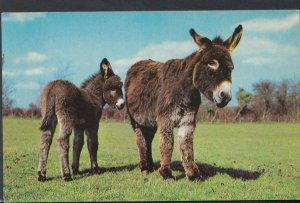 Animals Postcard - Two Donkeys   DC2446