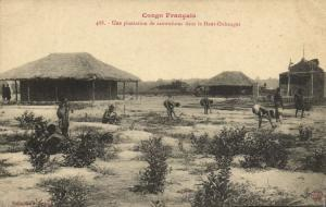 CPA Francais Congo Afrique - Une plantation de caoutchouc (86661)