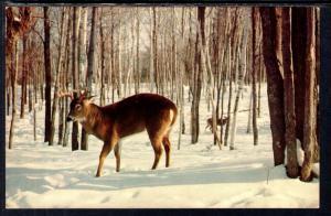 Deer,Winter Scene,BIN
