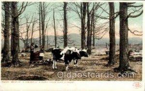 Maple Sugar Camp, Vermont, USA, Occupational Postcard Postcards Unused