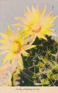 Hardy Hedgehog Cactus Blossom