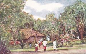 Tanzania Pemba Island Clove Trees