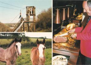 Devon Shire Horse Shire Centre Assault Course Carvery Postcard