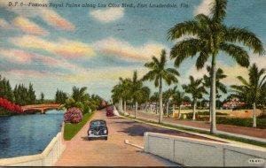 Florida Fort Lauderdale Royal Palms Along Las Olas Boulevard 1955 Curteich