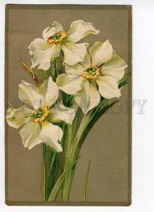 279740 Narcissus Flowers Bouquet by C. KLEIN Vintage GOM #1320