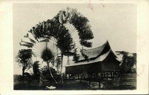 malay malaysia, Native House and Traveller's Palm Tree (1910s) RPPC Postcard