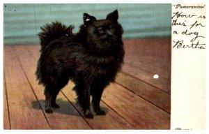 Dog,  Pomeranian
