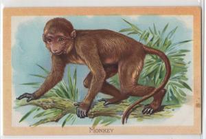 Raphael Tuck & Sons Embossed Monkey Wild Animals Series No. 401 Antique Postcard