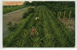 Pineapple Field Harvesting Farming Cuba 1929 postcard
