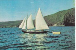Sailing , Bay of Islands , NEWFOUNDLAND , Canada , 50-70s