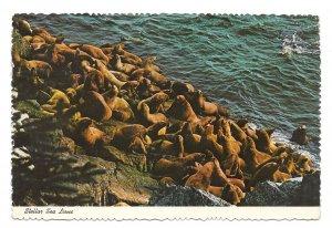 Stellar Sea Lions Ocean Rocks Vintage 1970s Continental 4X6 postcard