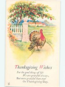 Divided-Back THANKSGIVING SCENE Great Postcard AA0687