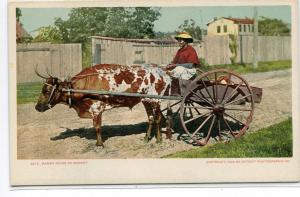 African American Black Woman Ox Bullock Cart Going to Market 1907c postcard